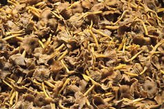 Chanterelle. Funnel chanterelle in Stockholm market stock image