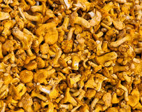 Chanterelle Photo stock