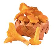 Chanterelle basket Stock Photos
