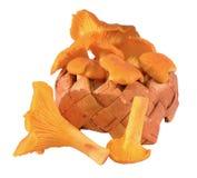 Chanterelle basket. Chanterelle mushroom basket isolated close-up Stock Photos