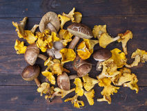 Chanterelle and bolete mushrooms Royalty Free Stock Photo