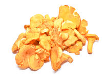 Chanterelle Stock Photo