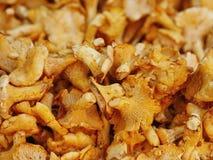 Chanterelle chantarelle market Royalty Free Stock Image