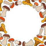 Chanterelle de forme de cercle, boletus ou Porcini, Aspen Mushroom Background Automne ou collection végétale de récolte d'automne illustration stock