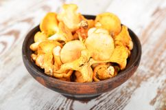 Chanterelle mushroom Royalty Free Stock Photos