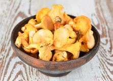 Chanterelle mushroom Royalty Free Stock Images