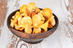Chanterelle mushroom Stock Photos