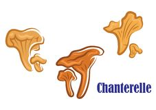 Chanterelle mushroom icons Stock Photography