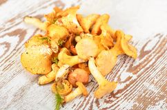 Chanterelle mushroom Royalty Free Stock Image