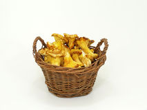 Chanterelle mushroom Stock Photo