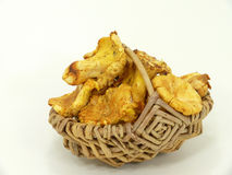 Chanterelle mushroom Royalty Free Stock Image