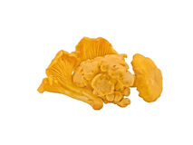 Chanterelle mushrooms. On a white background Royalty Free Stock Images