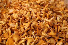 Free Chanterelle Mushrooms Stock Photography - 65106842