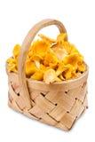 Chanterelle mushrooms in basket Stock Photography
