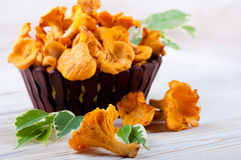 Chanterelle mushrooms Stock Photos