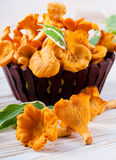 Chanterelle mushrooms in a basket Royalty Free Stock Photography