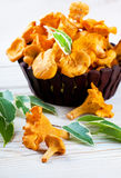 Chanterelle mushrooms Stock Image