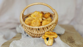 Chanterelle mushrooms in basket with napkin Royalty Free Stock Photo