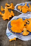 Chanterelle mushrooms in blue plates Royalty Free Stock Photography
