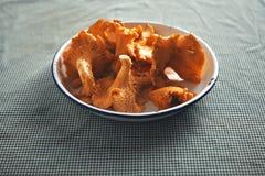 Chanterelle mushrooms in a bowl Royalty Free Stock Photos