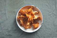 Chanterelle mushrooms in a bowl. A bowl of fresh orange chanterelle mushrooms on a table covered with navy and white gingham tablecloth Stock Photos