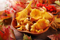Chanterelle mushrooms in bowl Stock Image