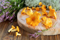 Chanterelle mushrooms on a cutting board Stock Photo