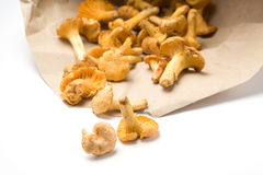 Chanterelle mushrooms falling Stock Photos