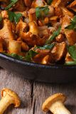 Chanterelle mushrooms in a frying pan closeup vertical. Royalty Free Stock Photos