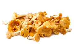 Chanterelle mushrooms isolated Royalty Free Stock Photography