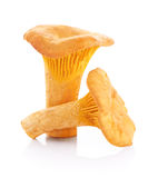 Chanterelle mushrooms isolated on a white background Royalty Free Stock Photography