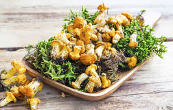 Chanterelle Mushrooms and Moss Stock Photo