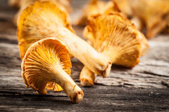 Chanterelle mushrooms. Objects on wood Royalty Free Stock Photo