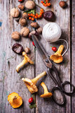 Chanterelle mushrooms with old scissors Stock Image