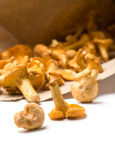 Chanterelle mushrooms in paper Stock Photography