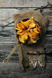 Chanterelle mushrooms picked in bowls Royalty Free Stock Images