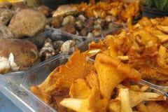 Chanterelle mushrooms at a street market. Chanterelle mushrooms and other assorted mushrooms at a street market Stock Photography