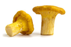 Chanterelle mushrooms on a white background Royalty Free Stock Photography