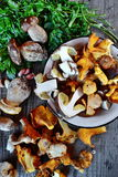 Chanterelle and Porcini Mushroom Royalty Free Stock Images