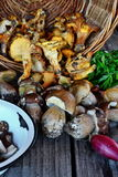 Chanterelle and Porcini Mushroom Stock Images