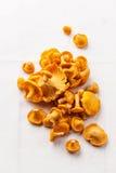 Chanterelle sauvage crue de champignons Images libres de droits