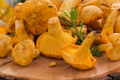 Chanterelle on a wooden background, close-up, selective focus Stock Image