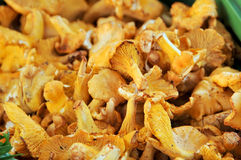 Chanterelles. A few of fresh chanterelles, mushrooms Royalty Free Stock Photo