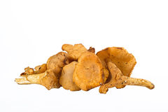 Chanterelles Stock Photography