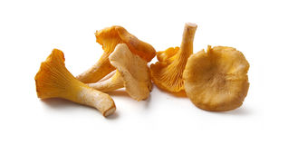Chanterelles Stock Images