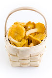 Chanterelles Royalty Free Stock Photo