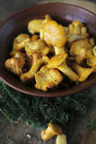 Chanterelles Obrazy Royalty Free