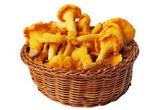 Chanterelles in basket Stock Photo