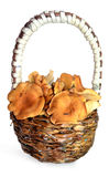 Chanterelles in a basket. Chanterelle mushrooms in a basket in the weaved hand-made paper basket Royalty Free Stock Images