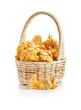 Chanterelles in a basket on a white Stock Photography